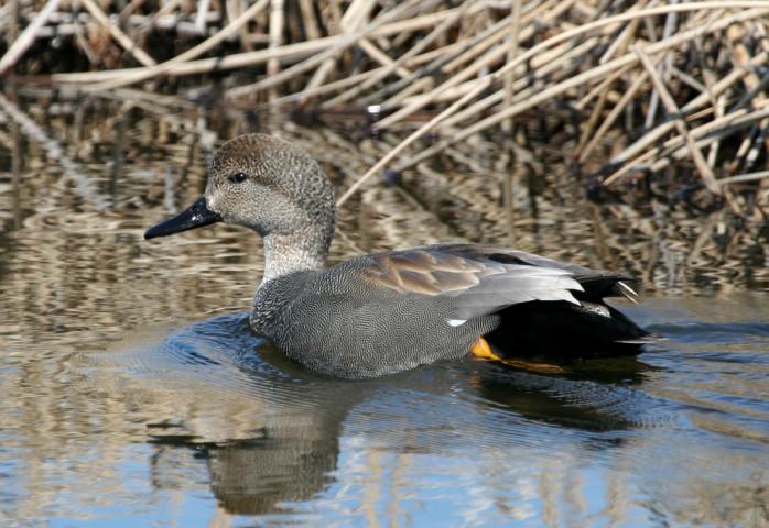 Jus ducky at Lake J