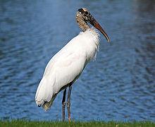Stoked for storks