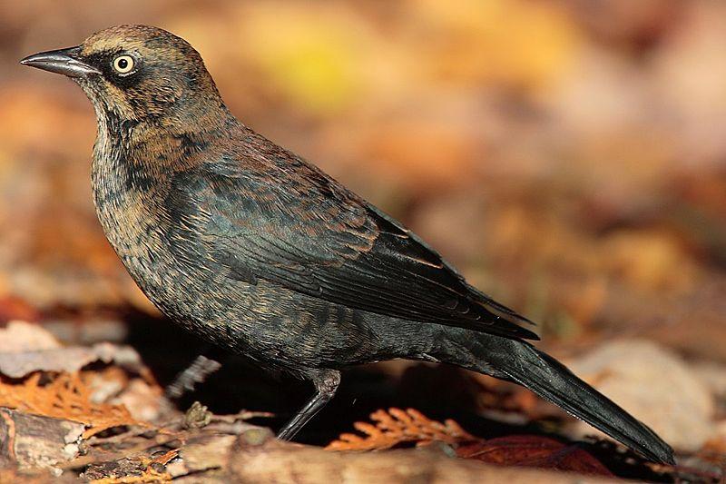 Power birding at Tessentee (again)
