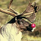 Re-introduce rudolph!