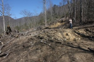 Logging in proposed Grandfather National Scenic Area - photo courtesy of Wild South