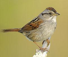 Audubon NC & Pantego